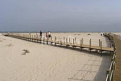 Ilha da Armona beach