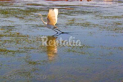 Ilha da Armona beach - Photo 1
