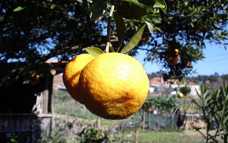Beco Jardín Leiria Leiria Villa en entorno rural - Jardín