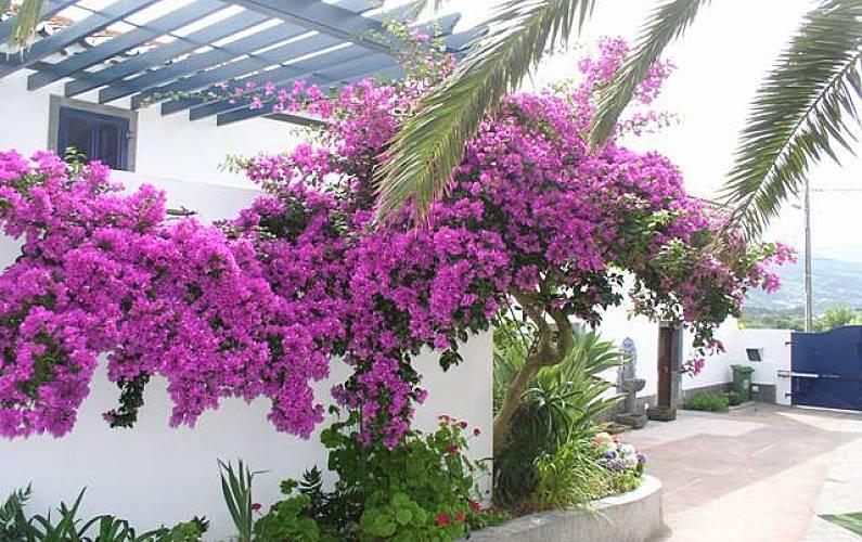 House Outdoors São Miguel Island Ponta Delgada Cottage - Outdoors