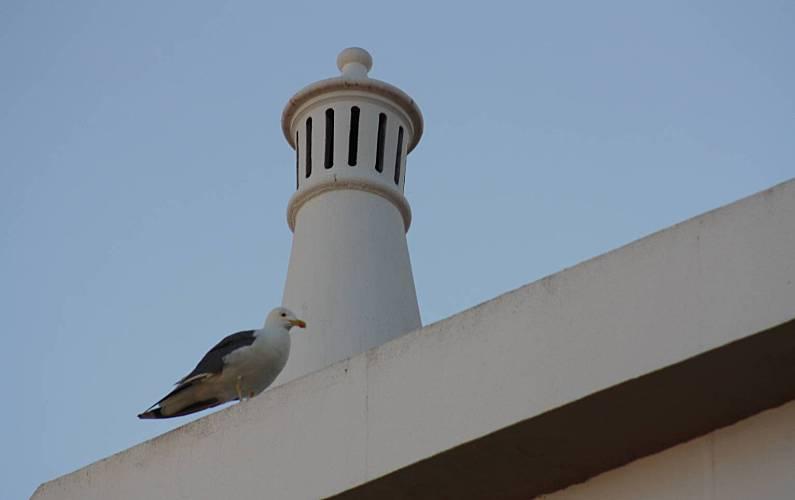 Apartamento, Vistas da casa Algarve-Faro Albufeira Apartamento - Vistas da casa