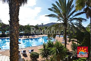 Best apartments in a real Oasis Fuerteventura