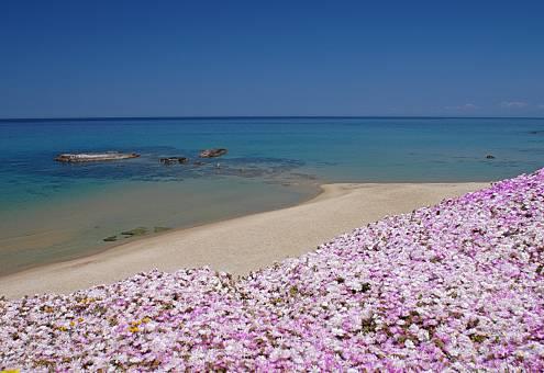 Appartement te huur op het strand Sassari