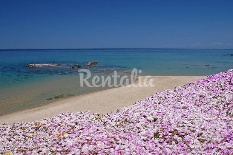 """La Rosa del mare"" 20 mt lejos de la playa Sassari"