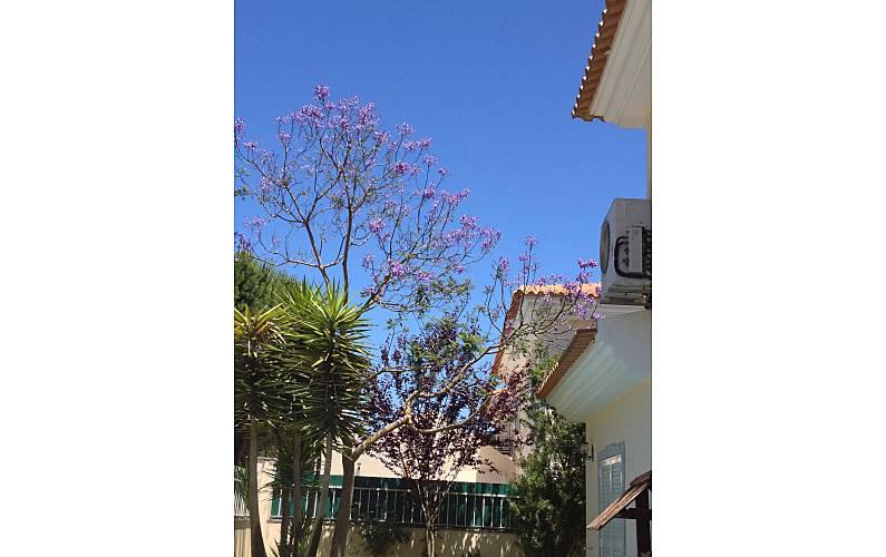 Vivenda Jardim Setúbal Sesimbra vivenda - Jardim