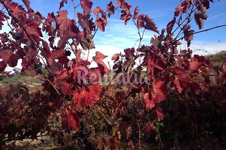 Casa  Rioja (La) Cornago Casa di campagna