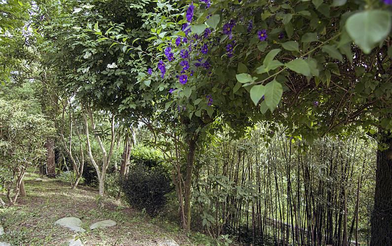 Casa Jardim Viana do Castelo Viana do Castelo Villa rural - Jardim