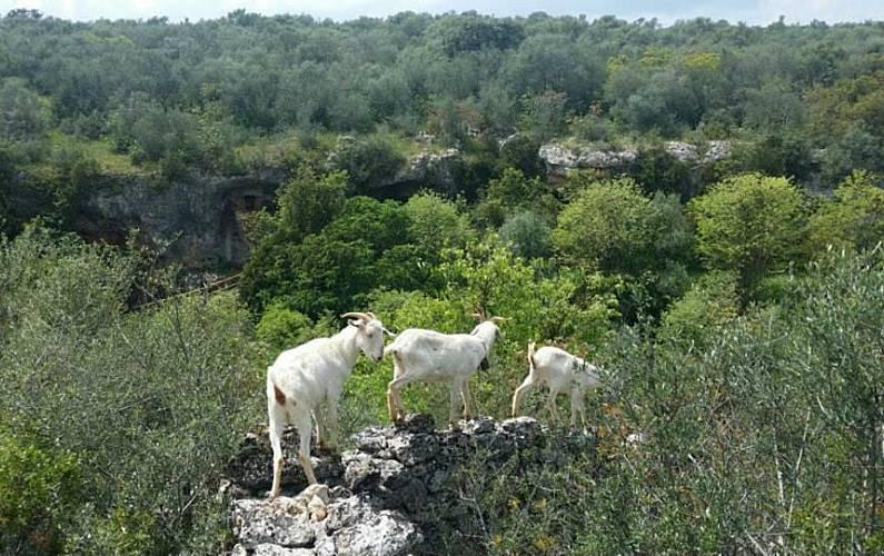 Villa Actividades cercanas Córdoba Hornachuelos Villa en entorno rural - Actividades cercanas